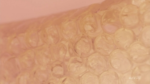 メンソレータム やわらか素肌オイル「かゆみ肌にオイル治療」篇0011