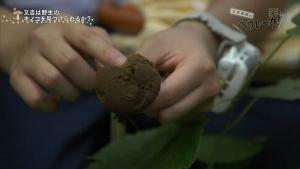 角田遥夏 又吉直樹のヘウレーカ!「キノコって木の子どもなの?」 0018