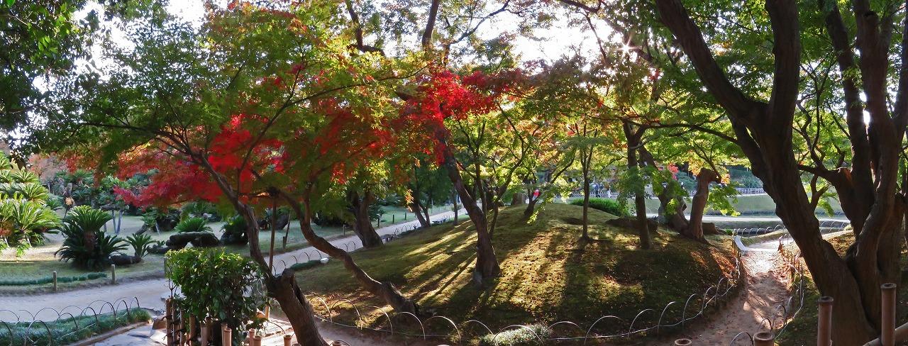 20181107 後楽園今日の午後の唯心山南山麓の楓の様子ワイド風景 (1)