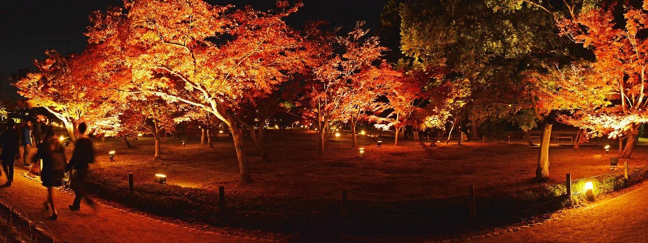 20181123 後楽園今日の秋の幻想庭園桜林から眺めた千入の森のライトアップワイド風景 (1)