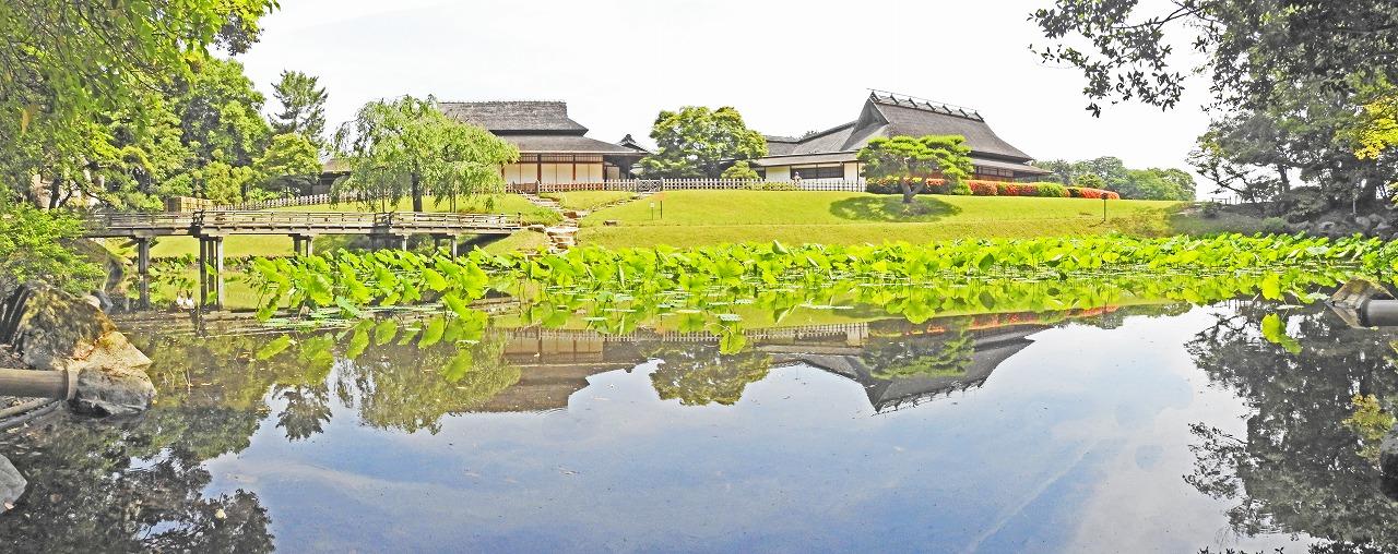 20190601 後楽園今日の園内花葉の池の二色が岡側から眺めたワイド風景 (1)