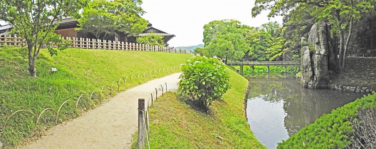 20190606 後楽園今日の午後の花葉の池のサンシュウの樹付近から眺めた園内花葉の池の様子ワイド風景 (1)
