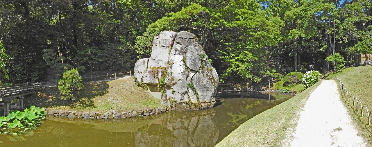 20190613 後楽園今日の花葉の池の西側の池の様子と大立石のワイド風景 (1)
