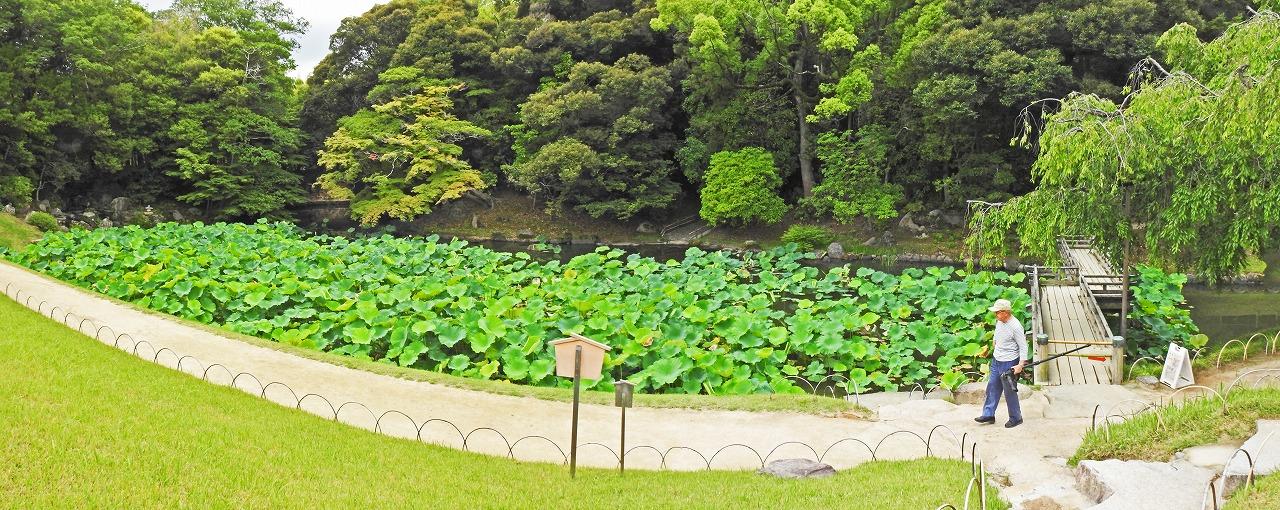 20190623 後楽園今日の花葉の池の様子を榮唱の間側から眺めたワイド風景 (1)
