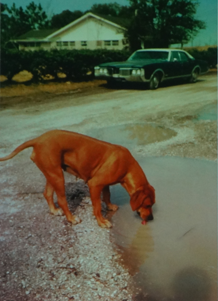 s-38赤犬_p128
