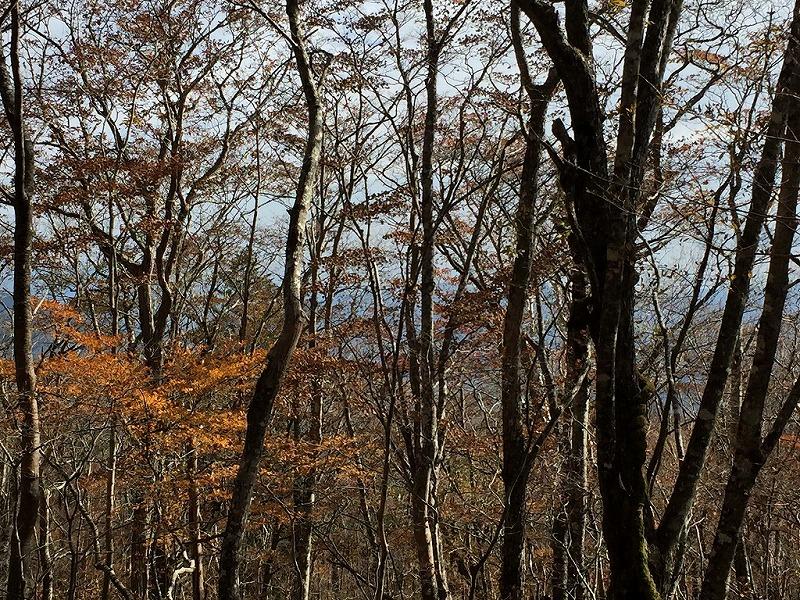 須走口の森の紅葉
