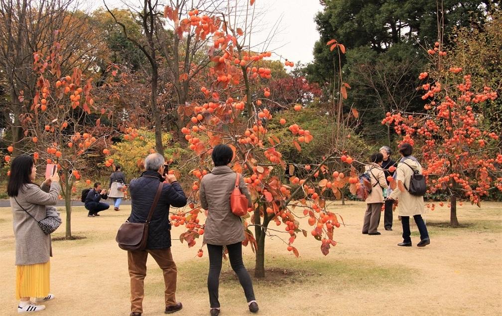 皇居内公園2