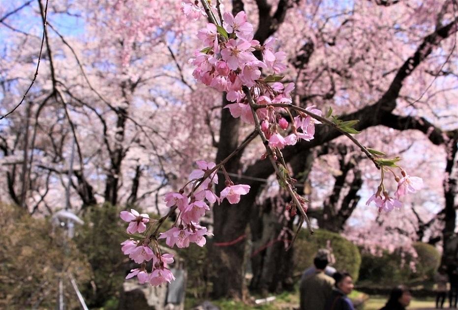 水沢公園3