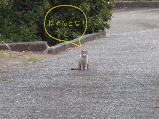 https://blogs.yahoo.co.jp/IMG/ybi/1/fe/4e/bazu55555/folder/109946/img_109946_30489483_8?1366718482