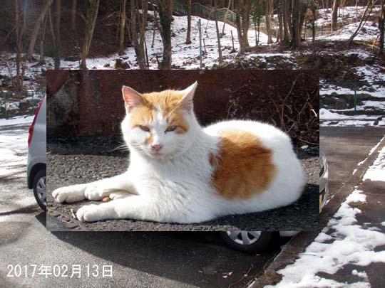 https://blog-001.west.edge.storage-yahoo.jp/res/blog-fe-4e/bazu55555/folder/109946/52/33019952/img_0_m?1487272414