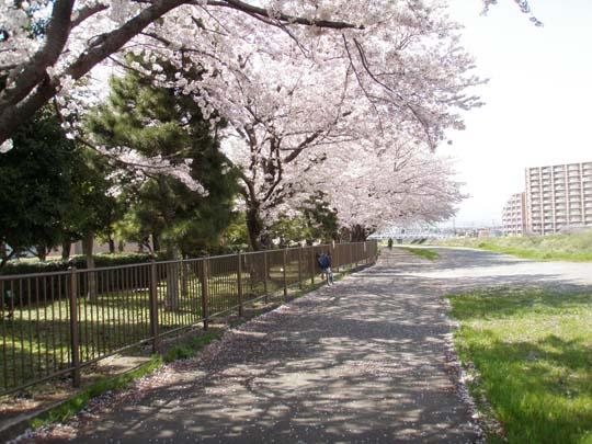 https://blog-001.west.edge.storage-yahoo.jp/res/blog-fe-4e/bazu55555/folder/109946/54/33084854/img_1_m?1492110035