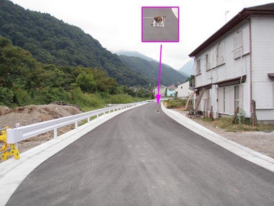 https://blog-001.west.edge.storage-yahoo.jp/res/blog-fe-4e/bazu55555/folder/109946/16/33274616/img_15_m?1506299601