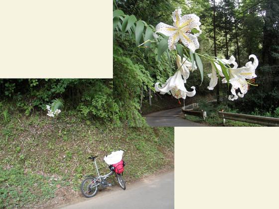 https://blog-001.west.edge.storage-yahoo.jp/res/blog-fe-4e/bazu55555/folder/109946/51/33609251/img_12_m?1532258106