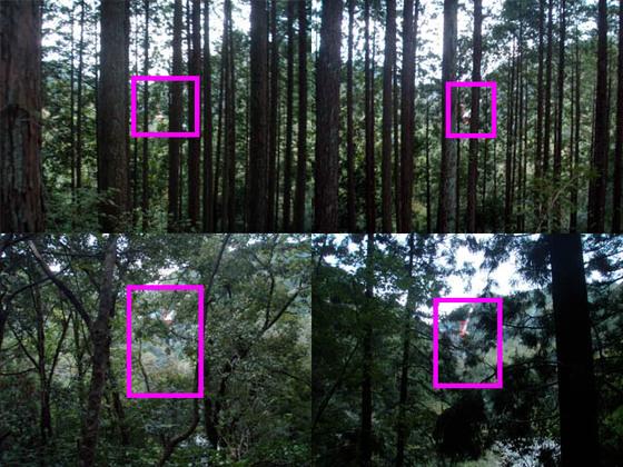 https://blog-001.west.edge.storage-yahoo.jp/res/blog-fe-4e/bazu55555/folder/109946/31/33706131/img_12_m?1540513043