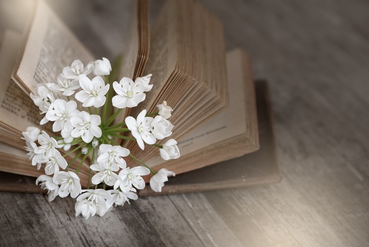 book-white-flower-petal-old-spring-1039392-pxhere-com.jpg