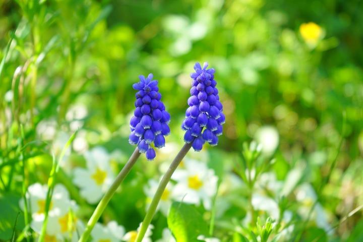 grass-blossom-plant-meadow-flower-bloom-1340440-pxhere-com.jpg
