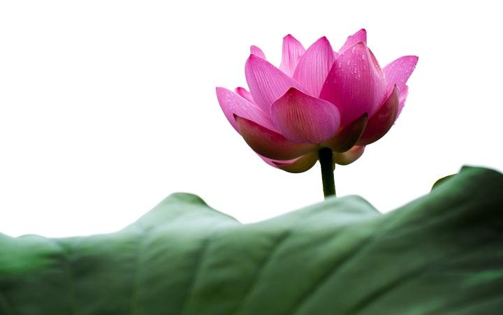 nature-blossom-plant-leaf-flower-petal-1235904-pxhere-com.jpg