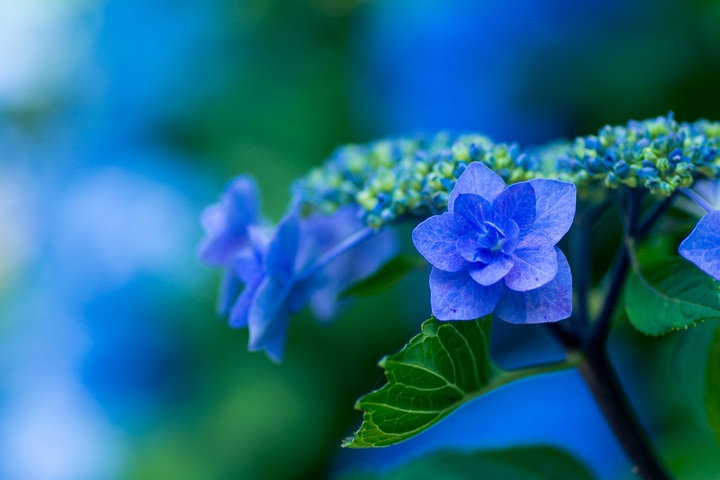 nature-blossom-plant-photography-flower-petal-654045-pxhere-com.jpg