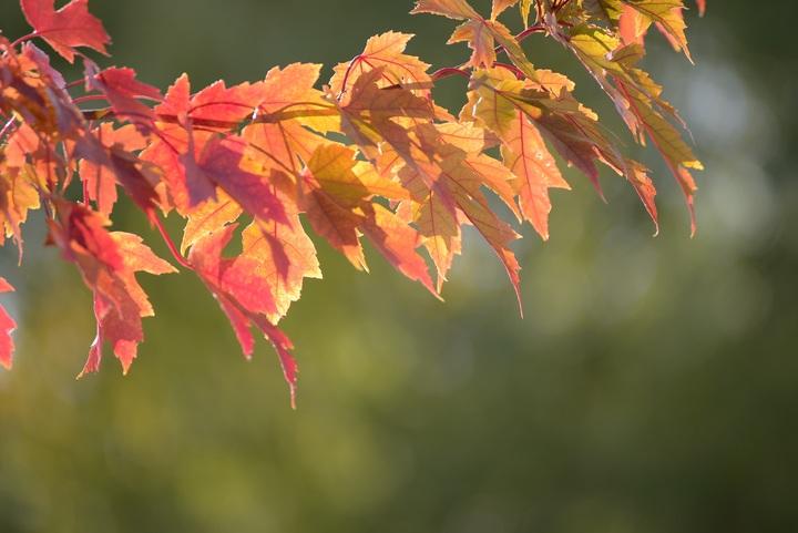 tree-nature-branch-plant-sunlight-leaf-542553-pxhere-com.jpg
