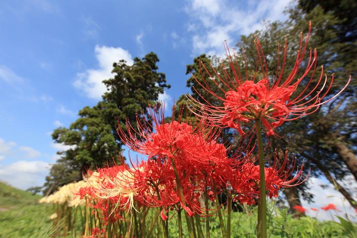 tree-plant-flower-high-autumn-botany-446787-pxhere-com.jpg