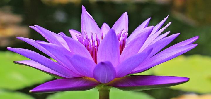 water-nature-blossom-plant-flower-purple-548094-pxhere-com.jpg