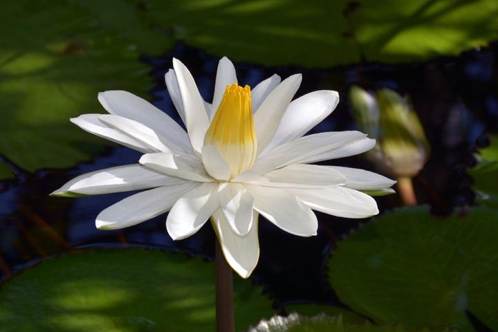 water-nature-blossom-plant-white-leaf-1056343-pxhere-com.jpg