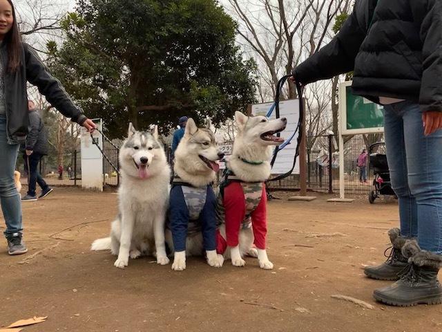 2019-03-10-4アポロ・レオ・無限君