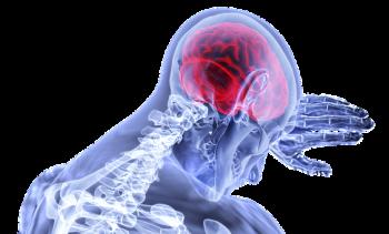 brain-3168269__340.png