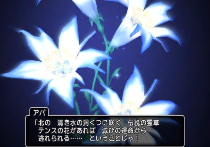 20190318テンスの花
