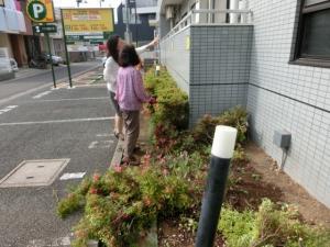 ご来客用駐車場の花壇♪