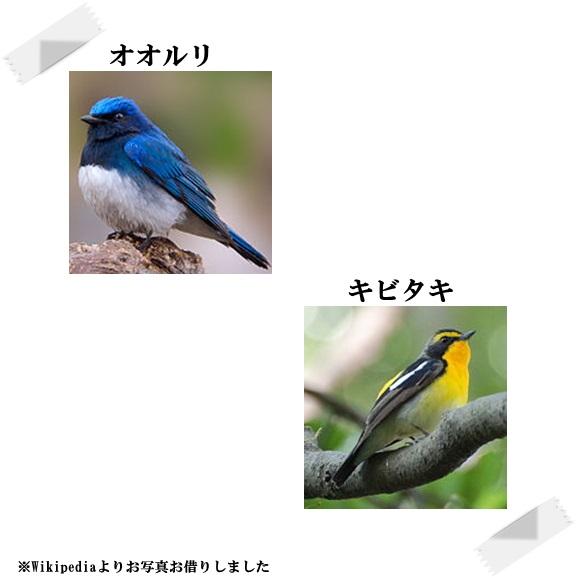 11_20190523173232dfa.jpg