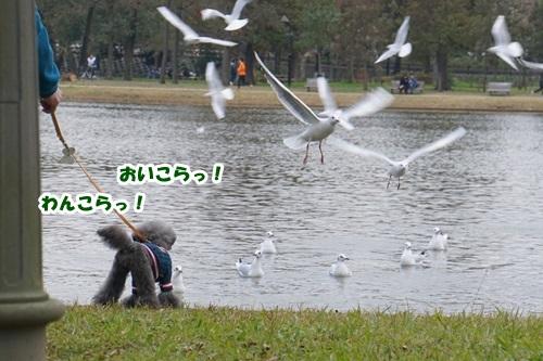 8_20190122161856fc4.jpg