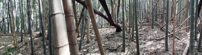 ichinodai1.jpg