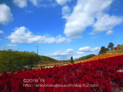 世羅ゆり園 2018-10-28 (12)