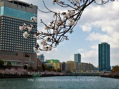桜(毛馬桜之宮公園) 2019-4-3 (1)