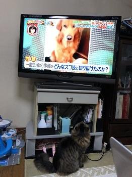 テレビ好き1