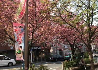 青山ブログ桜新町2