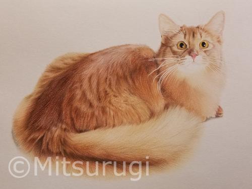 絵 イラスト ポートレート 肖像画 猫 ソマリ A4