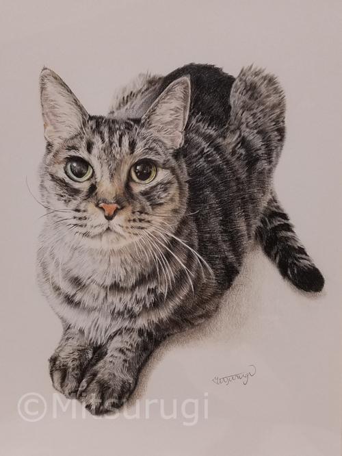絵 イラスト ポートレート 肖像画 猫 キジ猫 六つ切