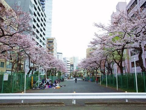 maruyamashoga13.jpg