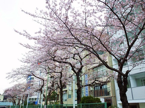 maruyamashoga14.jpg