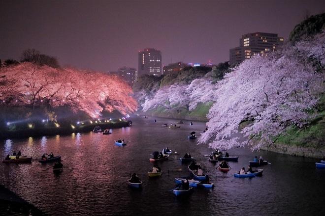 2019千鳥ヶ淵の桜(2)