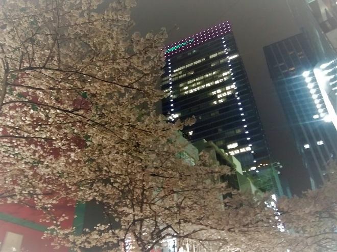 2019日本橋の桜(2)