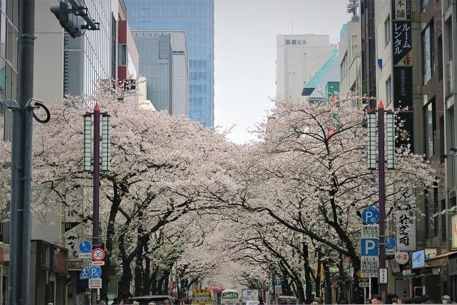 2019日本橋の桜(3)
