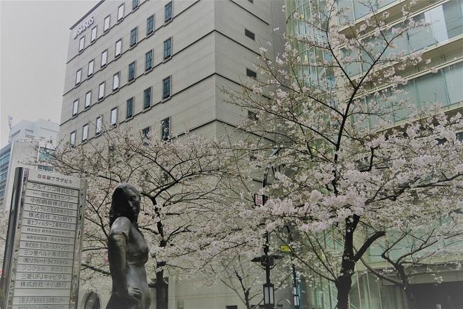 2019日本橋の桜(5)