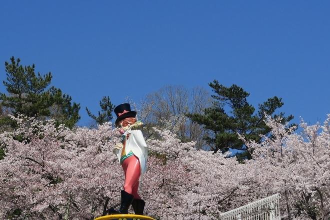 2019桜 さがみ湖プレジャーフォレストの桜(2)