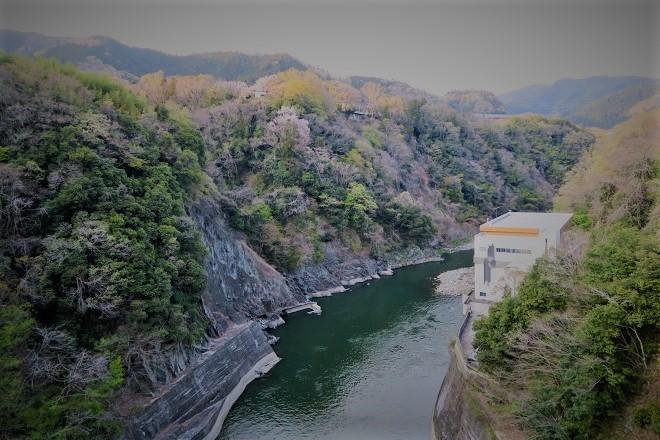2019相模湖と相模ダムの桜(2)