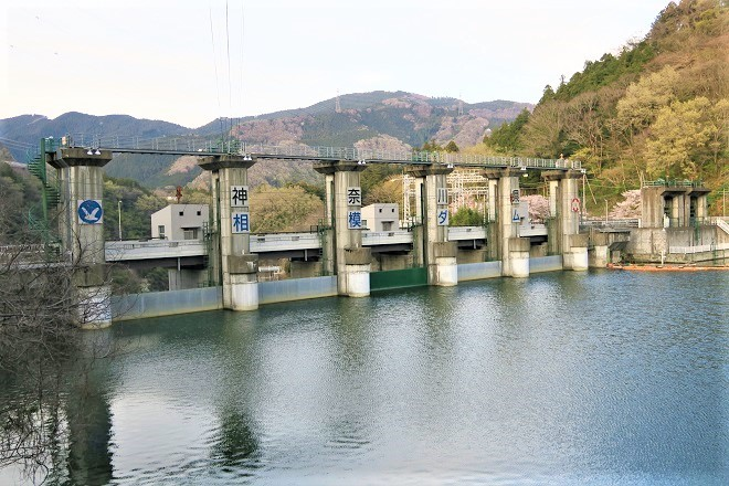 2019相模湖と相模ダムの桜(3)