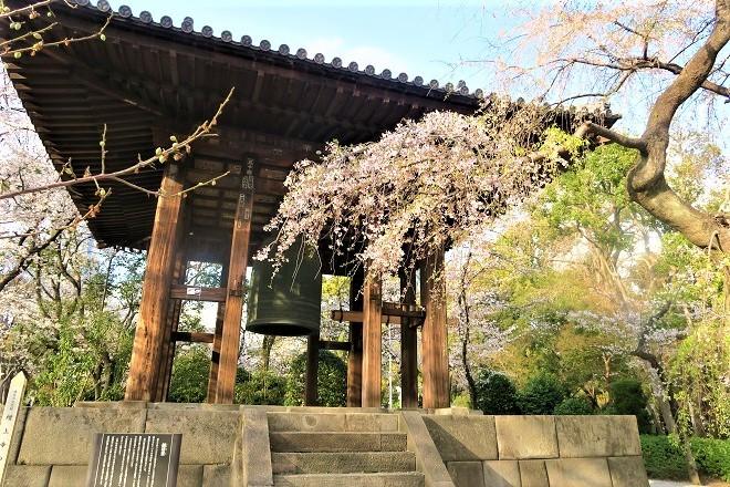 2019増上寺の桜(3)