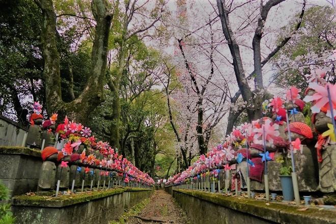 2019増上寺の桜(4)